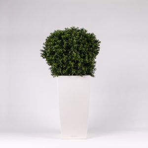 silkki puksipuupallo pilariruukussa | kasvi-istutus | viherviisikkokauppa.fi