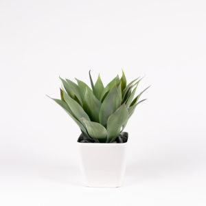 silkki agave ja neliöruukku | kasvi-istutus | viherviisikkokauppa.fi