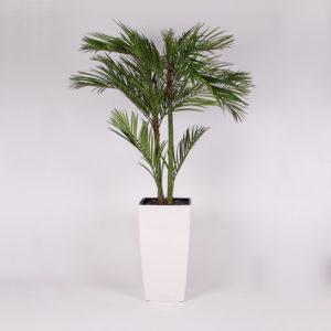 silkki areca-palmu pilariruukussa | silkkikasvi-istutus | viherviisikkokauppa.fi