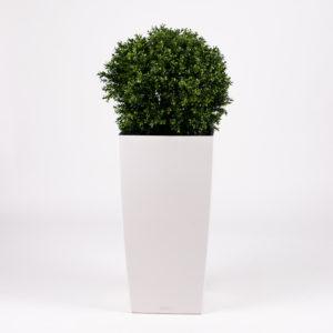 silkki puksipallo pilariruukussa | kasvi-istutus | viherviisikkokauppa.fi