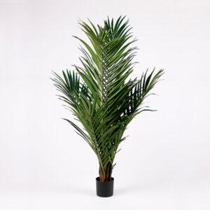 Tekokasvi | majesty palmu | majesteetipalmu | palmu