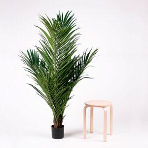 Tekokasvi | majesty palmu | majesteettipalmu | palmu
