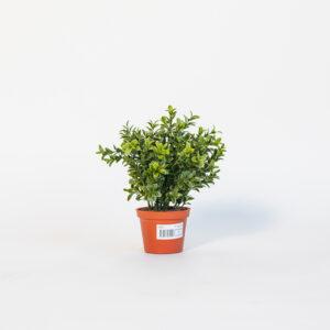silkki puksipuu | puksipallo | silkkikasvi | viherviisikkokauppa.fi