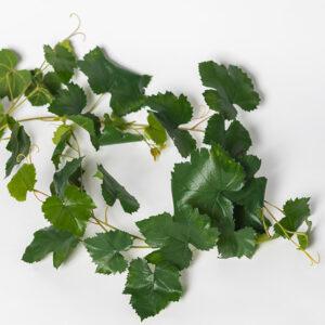 silkki viiniköynnös | köynnöskasvi | viherviisikkokauppa.fi
